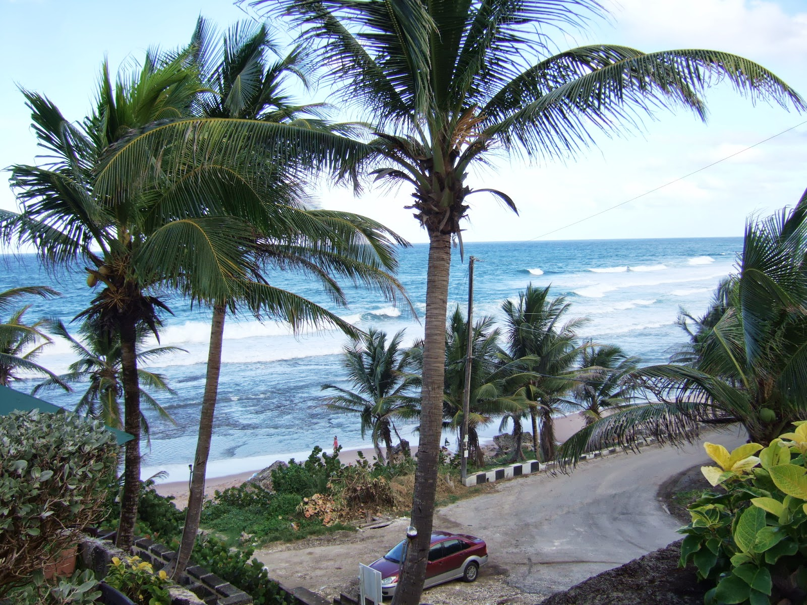 Beautiful waves crashing in palm tree lined Bathsheba beach