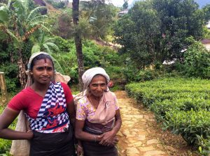 A mother and daughter duo, who are tea pluckers